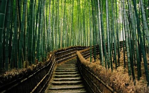 Japan bamboo